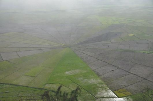 Spider Web Rice Field, Ruteng (Flores)