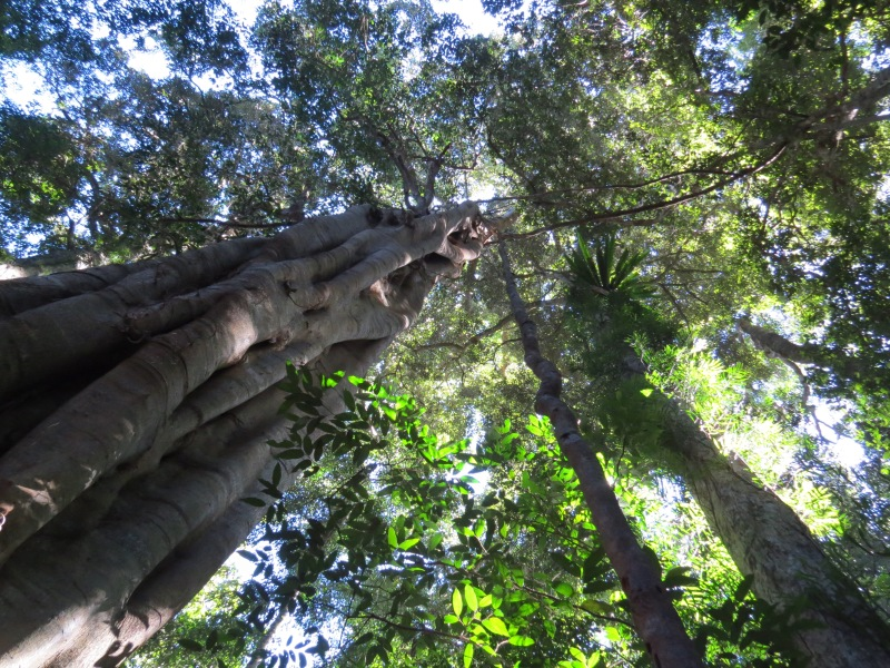 Mary Cairnscross Scenic Reserve